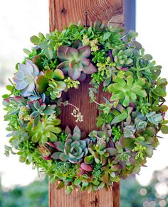 Succulent Wreath Tutorial ~ http://www.bhg.com/gardening/container/plans-ideas/make-a-succulent-wreath/#page=1