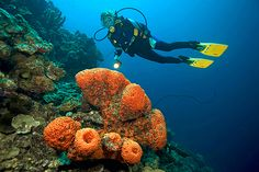 Magnificent Bonaire stands firmly on a pinnacle, reigning supreme over all other shore diving destinations in the world. With a decidedly rugged character, this charming Dutch island in the souther...