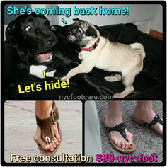 Why dogs hide….Fix your #feet Call #NYC #FOOTCARE 888-nyc-foot / nycfootcare.com / 212.385.2400 #nycfootcare #bunion #nypodiatrist #hammertoes #bunions #nj #feet #footcare #bunion #hammertoe #podiatry #podiatrist #foot #footpain #downtown...