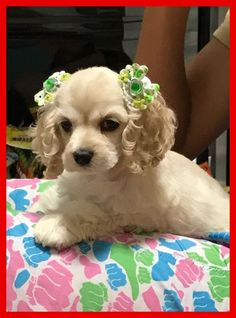 """Figure out even more details on """"cocker spaniel puppies"""". Look into our internet site. Perro Cocker Spaniel, American Cocker Spaniel, English Cocker Spaniel, Black Cocker Spaniel Puppies, Spaniel Dog, Cute Puppies, Cute Dogs, Dogs And Puppies, Doggies"""