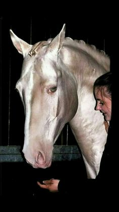 Look at that glow of this Akhal Teke. Look at that glow of this Akhal Teke. All The Pretty Horses, Beautiful Horses, Animals Beautiful, Animals And Pets, Cute Animals, Akhal Teke Horses, Appaloosa Horses, Majestic Horse, Tier Fotos