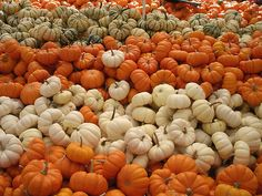 pumpkins--this reminds me of a scene I saw a few years ago in front of a church in Cape Cod!!