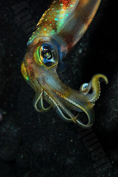 now that's one handsome cephalopod