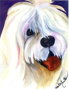 Buster with Bangs--Old English Sheepdog