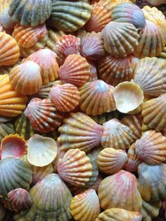 She sells sea shells by the sea shore ........ SUCH beauty