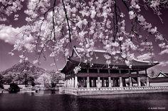 Spring Break in Seoul, South Korea