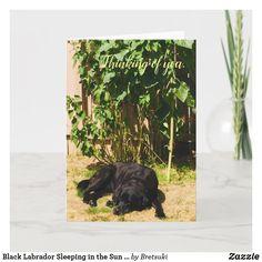 Black Labrador Sleeping in the Sun Thinking of You Card Small Plants, Green Plants, Black Labrador Retriever, Hunting Dogs, Plant Design, Sympathy Cards, Custom Greeting Cards, Artwork Design, Yellow Flowers