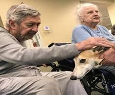 Image result for therapy whippet