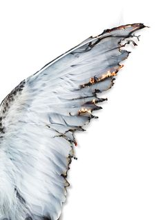Immagine di wings, angel, and fire