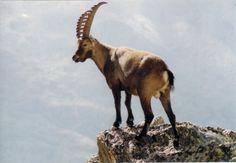 I 90 anni del #Parco Nazionale #GranParadiso