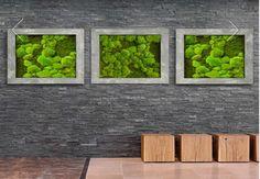 Mosses wall  Ambius.no