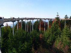 tree top walkway~ in St. Engelmar, Bavaria, Germany