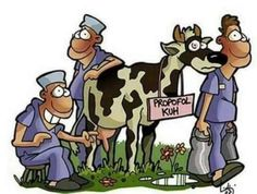 Medical Humor, Family Guy, Fictional Characters, Humor, Cow, Doctor Humor, Fantasy Characters