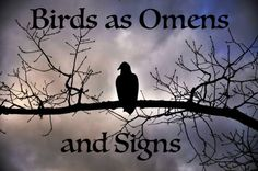 Birds as signs and omens; crows; ravens; blackbirds; owls; http://hubpages.com/hub/Birds-as-Omens-and-Signs