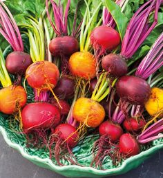 Growing all these three varieties of beetroot means you'll extend their harvesting season and get beautiful suppers and salads with the mixed colours.