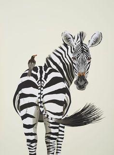 Common Zebra by MARCUS DAVIES | Artfinder