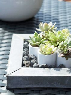Love these cute little succulents in white pots (or is it PVC pipe?) nestled in little rocks
