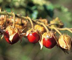 Récolter et conserver les graines des légumes et plantes cultivées