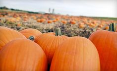 When you're looking for Halloween fun in Tulsa, OK this year, you will find many fun events. Some events are food related and some are activities for the whole family. Here are some local events you can enjoy in and around Tulsa, OK. Holidays Halloween, Halloween Party, Fall Harvest Party, Autumn Harvest, Fall Birthday Parties, Theme Parties, Birthday Ideas, Little Pumpkin Party