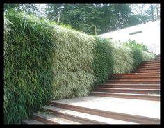 Muro verde bicolor !