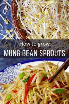 Making homegrown mung bean sprouts is easy! My guide explains the method, the equipment required and useful tips. A delicious stir-fry recipe is also included. #redhousespice Bean Sprout Recipes, Vegetable Recipes, Vegetarian Recipes, Healthy Recipes, Easy Asian Recipes, Clean Recipes, Ethnic Recipes, Chinese Recipes, Chinese Food