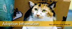 BC SPCA: Adoption options