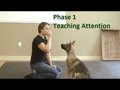 Training your puppy is centered on building your relationship with your dog as well as implementing boundaries. Be firm but consistent and you will see remarkable results in your dog training adventures. Positive Dog Training, Training Your Puppy, Dog Training Tips, Training Schedule, Potty Training, Training Equipment, Training Pads, Safety Training, Training Classes