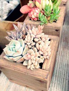 Ornamental plants in the house is a dried plant used for ornamental plants that are often placed in the room. Like mini cactus plants that are generally mini-sized commonly planted on pot media.
