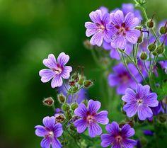 prettylittleflower:    (by _LUKA_)