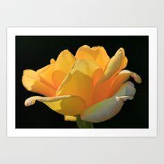 Yellow rose Art Print by Nicholas Smith - $15.60