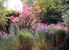 Herbst Plants, Autumn, Garten, Pictures, Flora, Plant, Planting