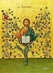 True Vine-Ordination