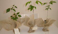 Plantinhas para lembrancinha de casamento