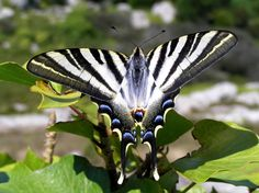"""https://flic.kr/p/3dSNb 