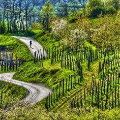 Slovenia, Garden Bridge, Outdoor Structures, Photography, Travel, Inspiration, Biblical Inspiration, Photograph, Viajes
