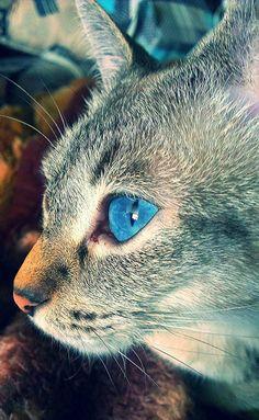 My Feline Friend ♥