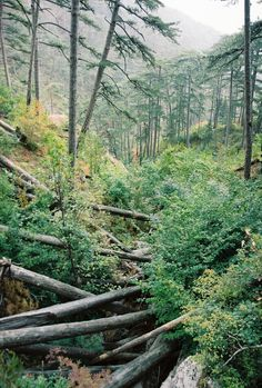 A Nature Blog