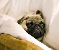 I refuse to get out of bed today.