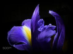 Blue Awakening ... by Herbert Pregel on 500px