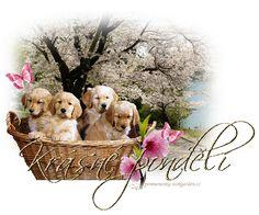 Krásny pondelok Teddy Bear, Animals, Weaving, Animales, Animaux, Teddy Bears, Animal, Animais