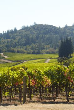 Napa Valley is the best place to travel to for the great wine, beautiful weather and an incredible trip.