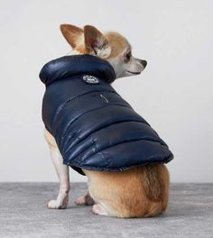 Navy American Beagle Outfitters Puffer Jacket - want this for my pup! Dog Vest, Dog Jacket, I Love Dogs, Cute Dogs, American Beagle, Cute Animal Pictures, Dogs Of The World, Four Legged, Dog Care