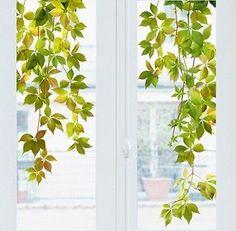 Fenstersticker XXL Wilder Wein Efeu Blätter Bäume Pflanzen Aufkleber Sticker in Möbel & Wohnen, Dekoration, Wandtattoos & Wandbilder | eBay