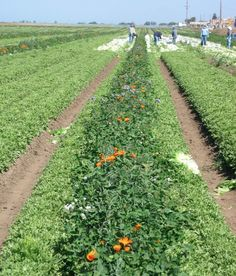 Rural California Report - Food Insecurity Among Farm Workers in the Salinas Valley