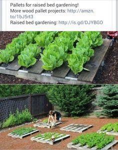 Cool gardening idea