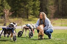 Amazing dogs relearn to walk with acupuncture, hydrotherapy or doggie wheelchairs :)