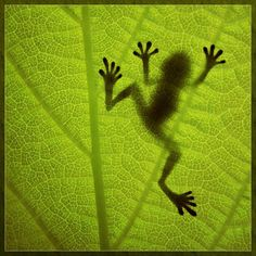 silhouette on a leaf...