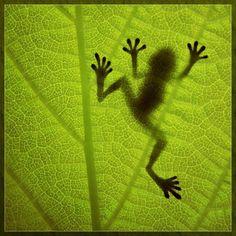 silhouette on a leaf...