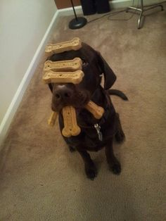 They're very patient. | 27 Reasons Labradors Are The Best Creatures In The Galaxy