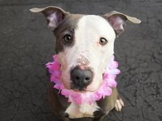 TO BE DESTROYED 04/17/15 – JUNGLE – A1032598